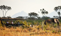 Elsas-Kopje-Meru-Game-Drives-Elephants