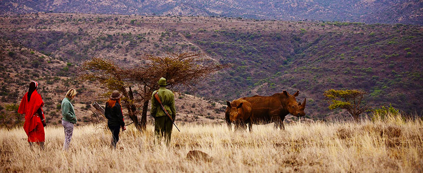 Lewa-Safari-Camp-Bush-Walk-Rhino