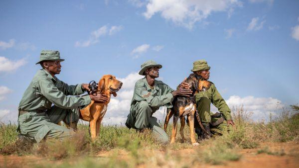elewana-loisaba-lodo-springs-activities-tracker-dogs18A7A752-F01A-0538-B692-12CC134A7C6B.jpg