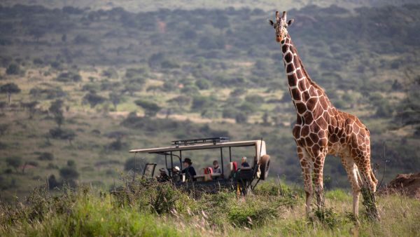 elewana-loisaba-lodo-springs-activities-wildlife-gamedrive-girraffe78425DAE-C929-077F-40F9-7AD50BB9A98B.jpg