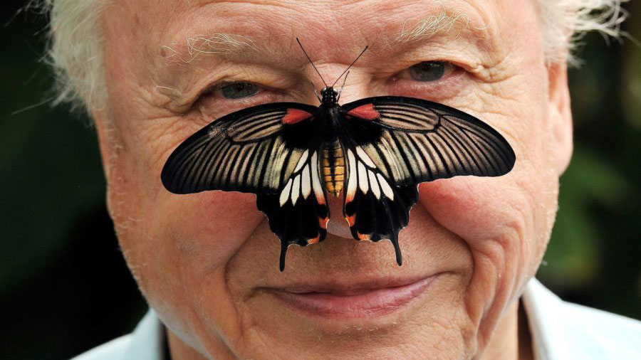 Sir David Attenborough And Africa