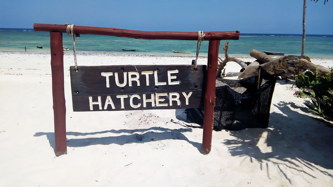 Turtle-Hatchery-ACD