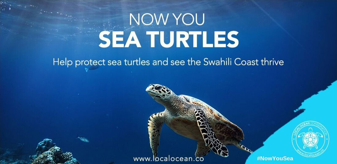 Now You Sea Turtles Asset