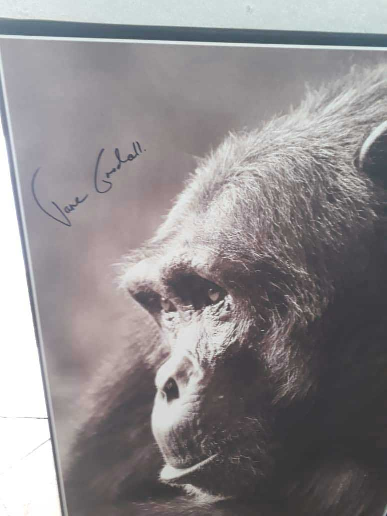 3-Signed-image-by-Jane-Goodall-for-auction
