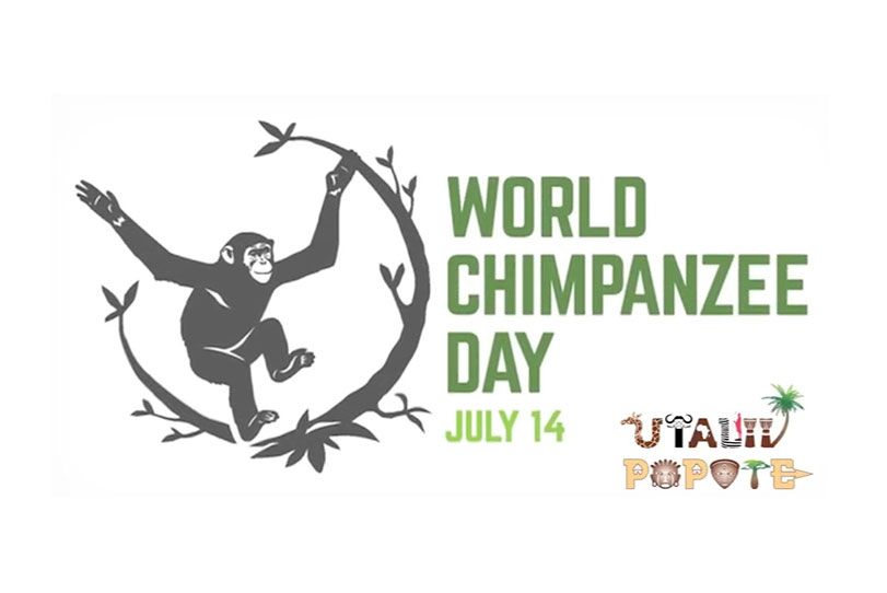 world-chimpanzee-day